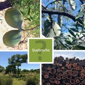 Quebracho - Everything You Need To Know