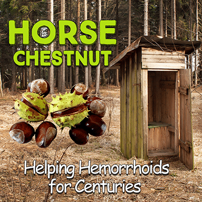 Horse Chestnut: Helping Hemorrhoids for Centuries