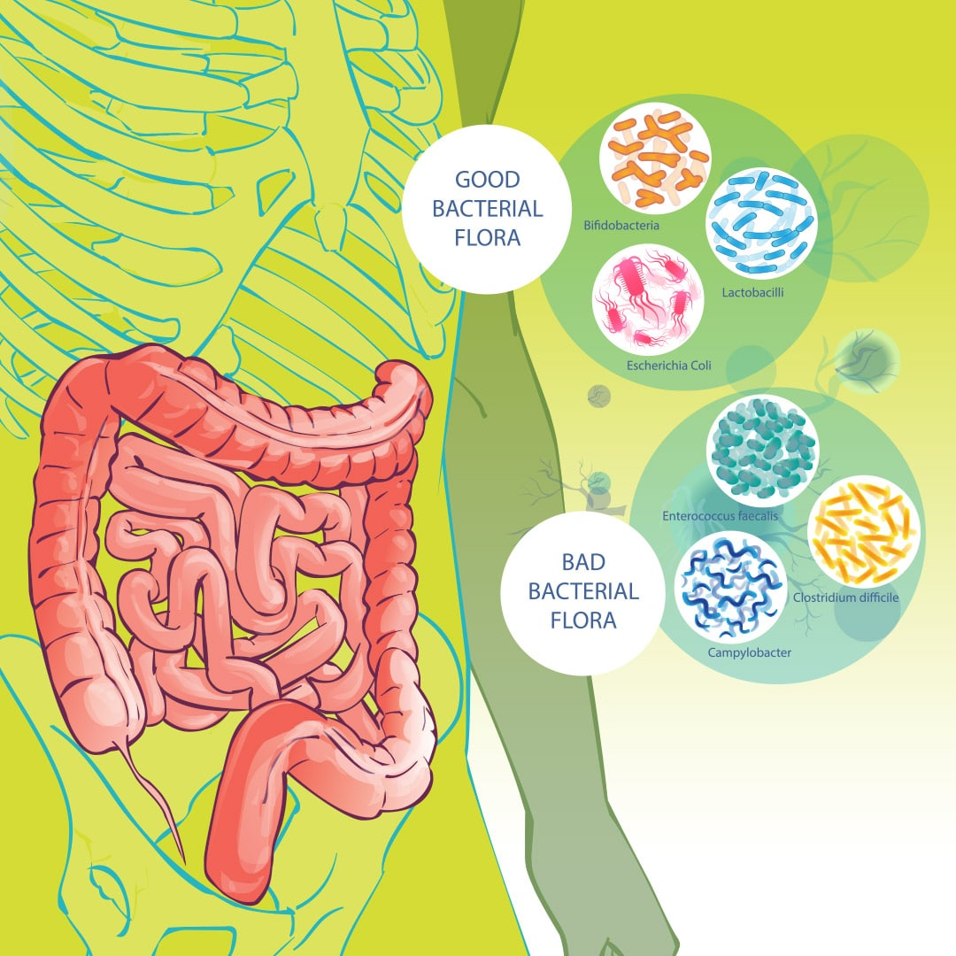 Spore-Based Probiotics vs Normal Probiotics: What\'s the Difference?
