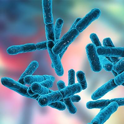 Spore-Based Bacteria Species