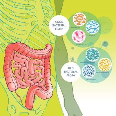 SBO Probiotics (Spore-Based Probiotics)