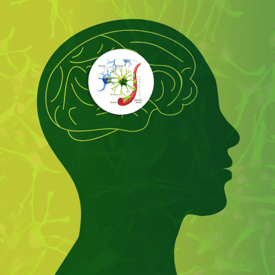 Fight Inflammation Naturally - New Cell Type Discovered for Gut-Derived Brain Protection 3